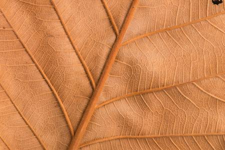 seca textura de la hoja de color marrón