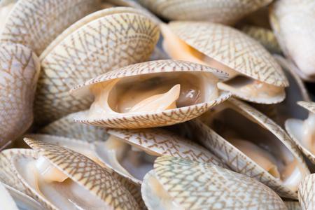 Clams shell or short neck clams close up shot
