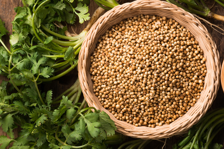 Coriander seeds and leaves fresh green cilantro on a wooden background , Food herbal aroma ingredient . Stock Photo