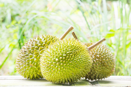 Durian fruit in agriculture farm in south thailand