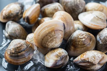 신선한 에나멜 금성 껍질 (Meretrix lyrata) Meretrix는 식용 바닷물 대합 제, Veneridae에 속하는 해양 이매패 류의 연체 동물, 금성 조개의 속입니다.