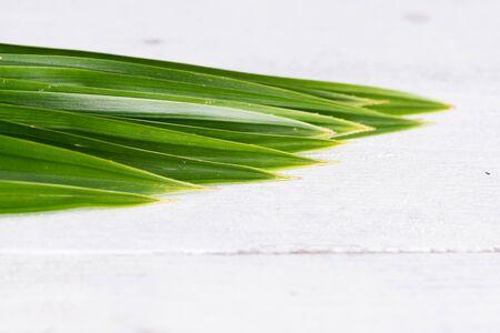 Fresh Fragrant Pandan leaves on white wood background Stock Photo