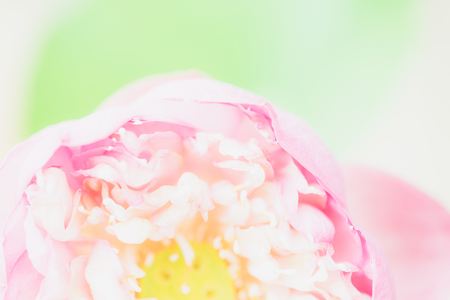 Sweet pastel color lotus in soft style for background 写真素材
