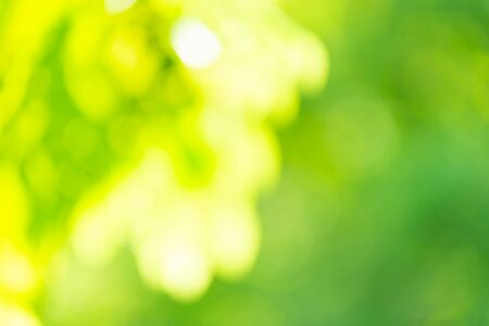 Green blurred background. Green bokeh out of focus foliage background. Fresh green bio abstract blurred background