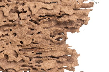 Piece of wood infested damaged and eaten by termite isolated on white background