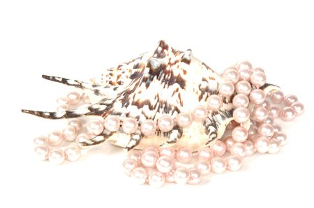 glister: Pearl necklace and beautiful big seashell, isolated on white Stock Photo