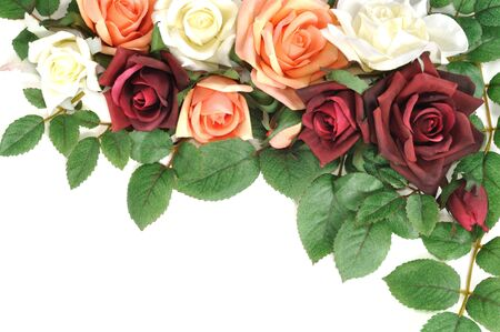 flores exoticas: Marco de coloridos rosas, aislados en blanco