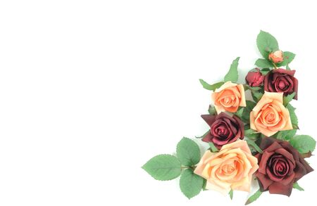 Batch of colorful roses on a white background photo