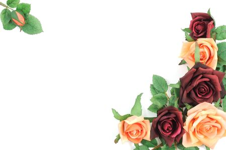 Batch of colorful roses on a white background Stock Photo - 8942275