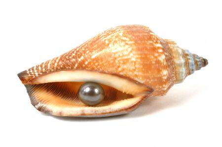 Precious black pearl inside a seashell ,  micro shot