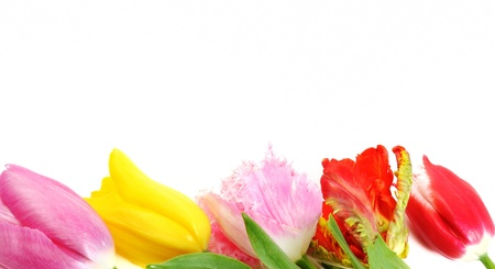beautiful red tulips close up: Spring tulip flowers border, close up, isolated on white background Stock Photo