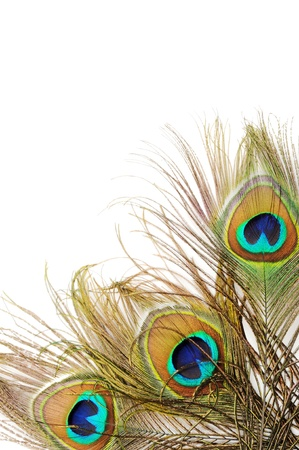 plumas de pavo real: Tres hermosas plumas de pavo real, de cerca, dispar� micro Foto de archivo