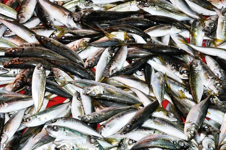Fresh sea fish in outside market, background,  close up photo