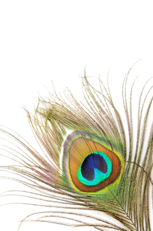 Beautiful peacock feather, close up ,on a white background Stock Photo