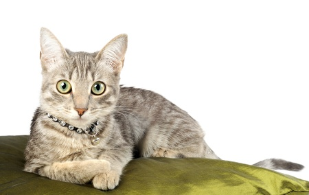 Beautiful gray kitten, on a on a green pillow photo