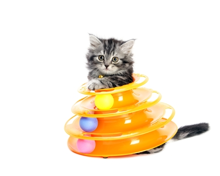 Kitty with toy for cats