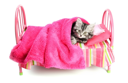 Little cat on a little bed Stock Photo