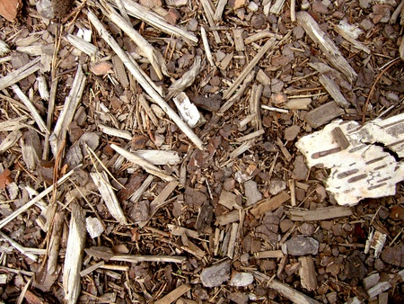 Wood chips, sawdust and woodscraps texture Stock Photo