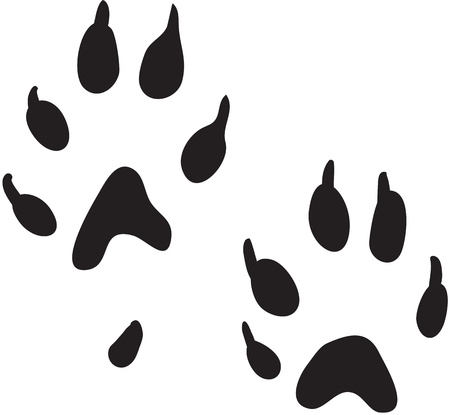 Ferret paws print