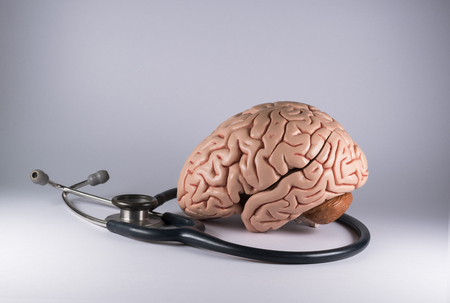 Artificial human brain model and stethoscope