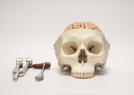 Human skull model and medical equpments Stock Photo