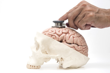 Concept of doctor's stethoscope examining human brain and skull model on white background