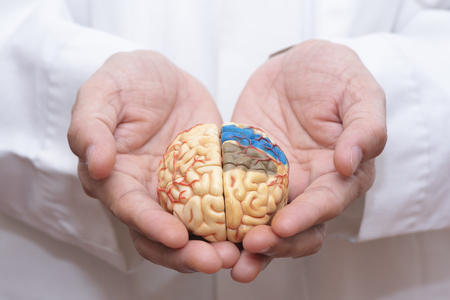 Doctor using finger to hold a brain model with both hands in concept of taking care the brain Stock Photo