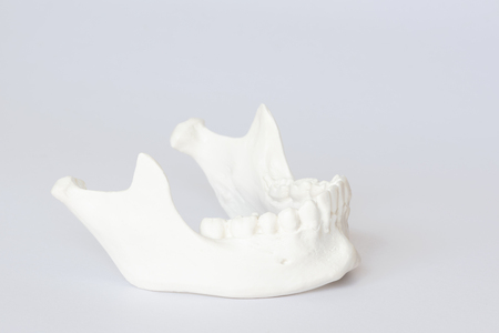 Side view of human artificial jaw bone or mandible model on white background