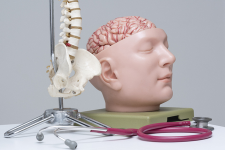 A red stethoscope, artificial lumbar spine and brain model on the table in medical office Stock Photo