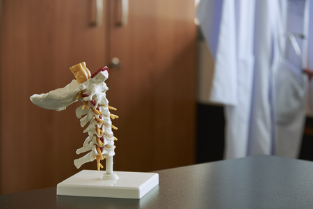 Artificial human cervical spine model in medical office. Labcoat with stethoscope and reflex hammer in the pocket on background