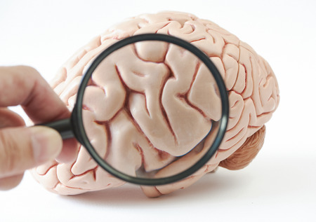 Magnification of human brain model on white background. A hand holding magnification glass. Banco de Imagens - 114551505