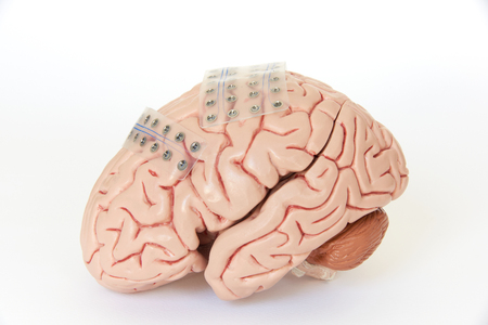 Two of subdural grid electrode for brain waves recording or electroencephalography on the artificial brain model cortex