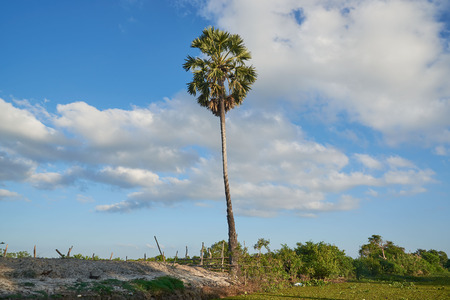 Rural scene and a coconut palm tree on blue sky and clouds background Stock Photo