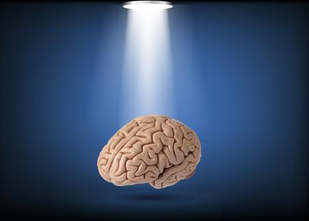Artificial human brain model, oblique view on studio light background