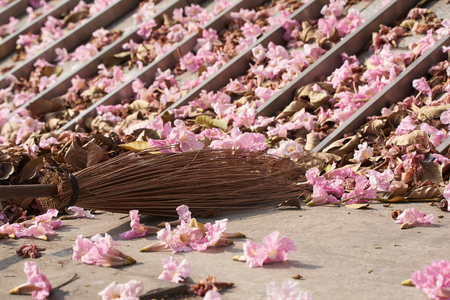 A broom for cleaning tabebuia rosea flowers on the floor Stock Photo