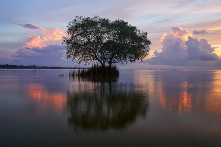 A cork tree or mangrove apple and reflection against beautiful colour sky background