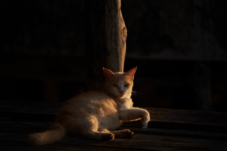 A brown cat lying near the wooden pole with sunlight and shadow Stock Photo