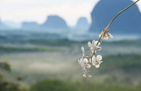 Beautiful white orchid and background of mountain range at Din Deang Doi view point, Krabi, Thailand