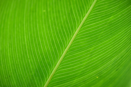 Background macrophotography image of green leaf texture Stock Photo