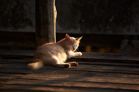 A cat lying on wooden floor and closing eyes for morning sunlight