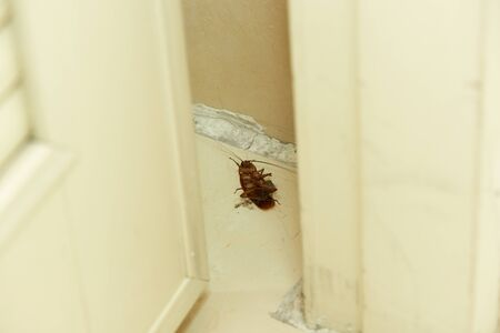 A dead cockroach lying on the floor in the toilet
