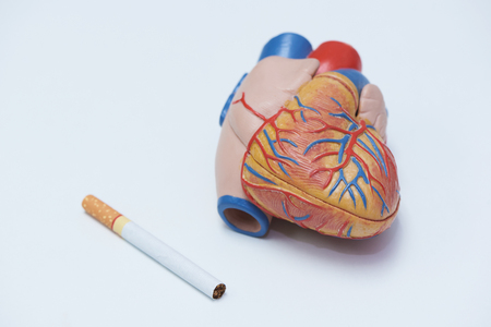 World no tobacco day. Concept of smoking harm to heart. Cigarette and artifical human heart model on white background