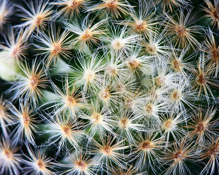 Close-up view of beautiful cactus on black background