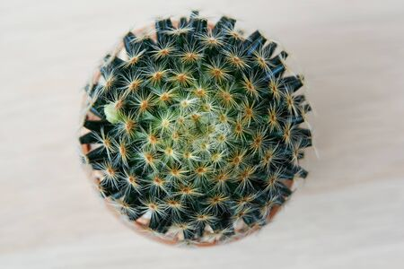 Close-up top view of beautiful cactus on wooden background 写真素材