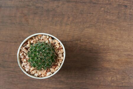 Top view of beautiful discocactus in the pot on wooden background