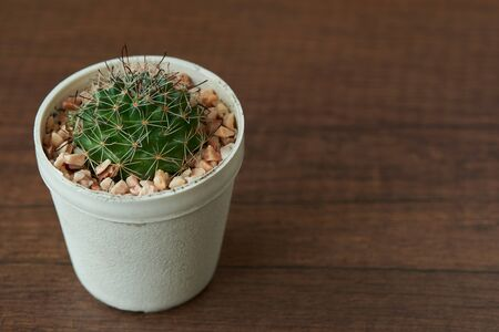 View of beautiful discocactus in the pot on wooden background