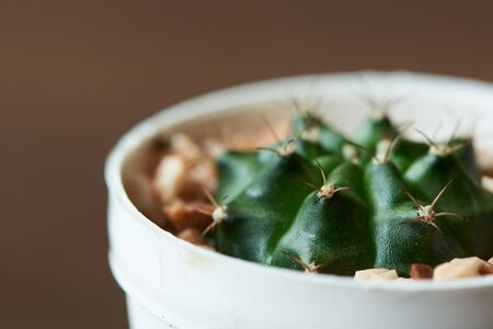 Close-up view of beautiful cactus in the flowerpot