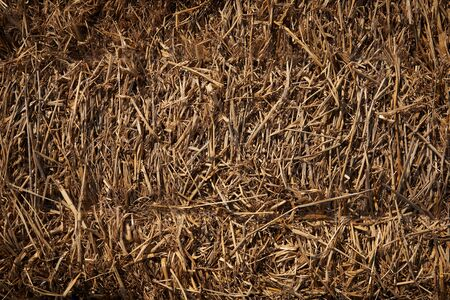 Background pattern of dry brown straw in sunny day