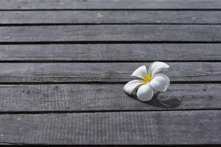 A beautiful plumeria alba flower on wooden background