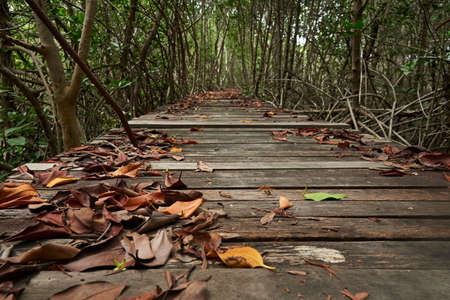 Fallen leaves on the wooden walkway. Mangrove forest on background. Stockfoto